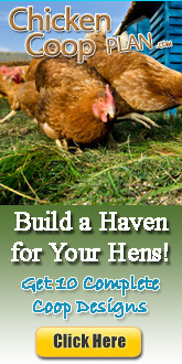 keeping chickens newsletter's chicken coop plans