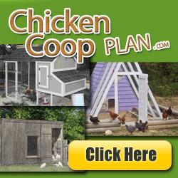 coop designs